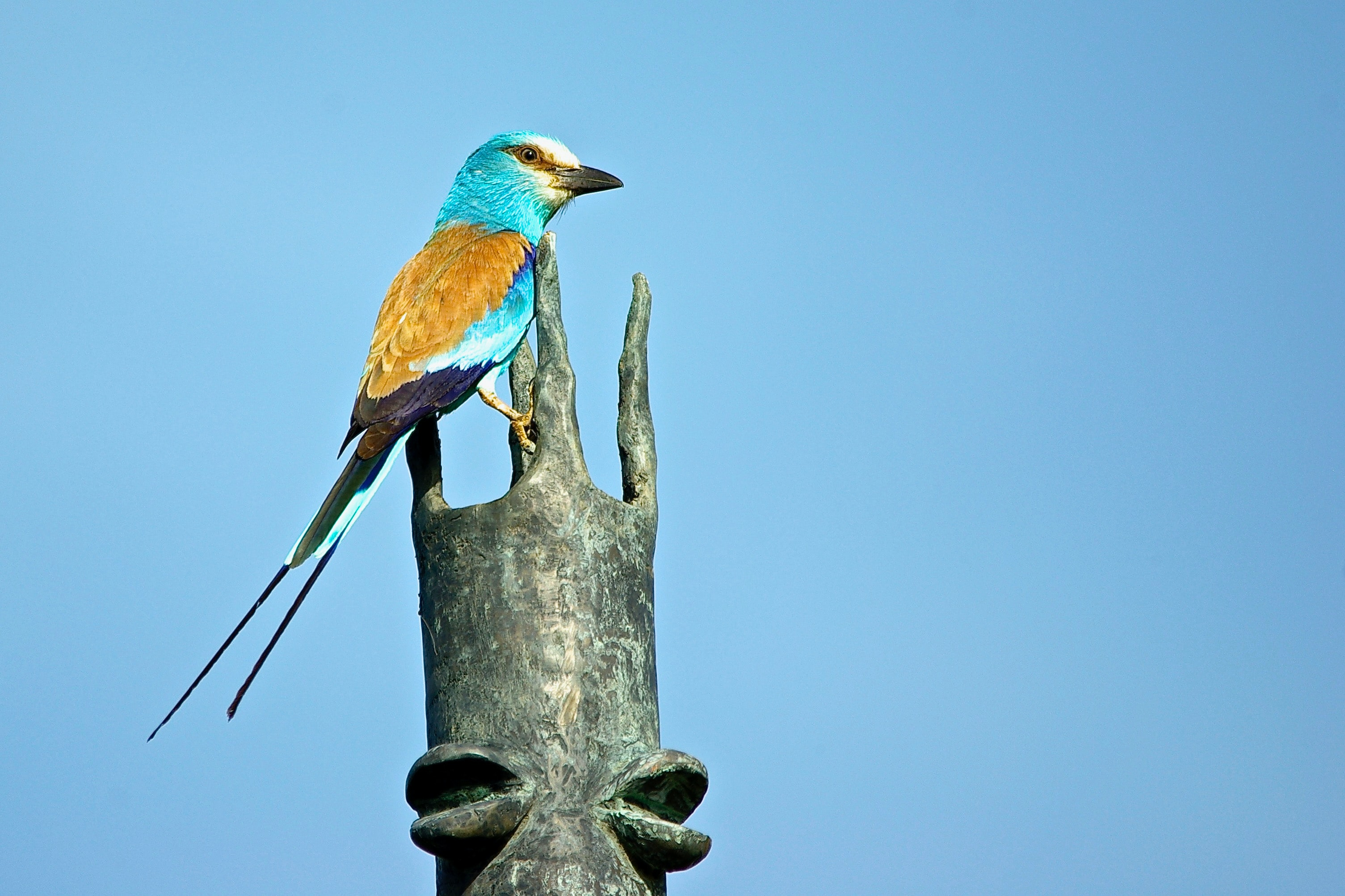 blue and brown bird on tree branch