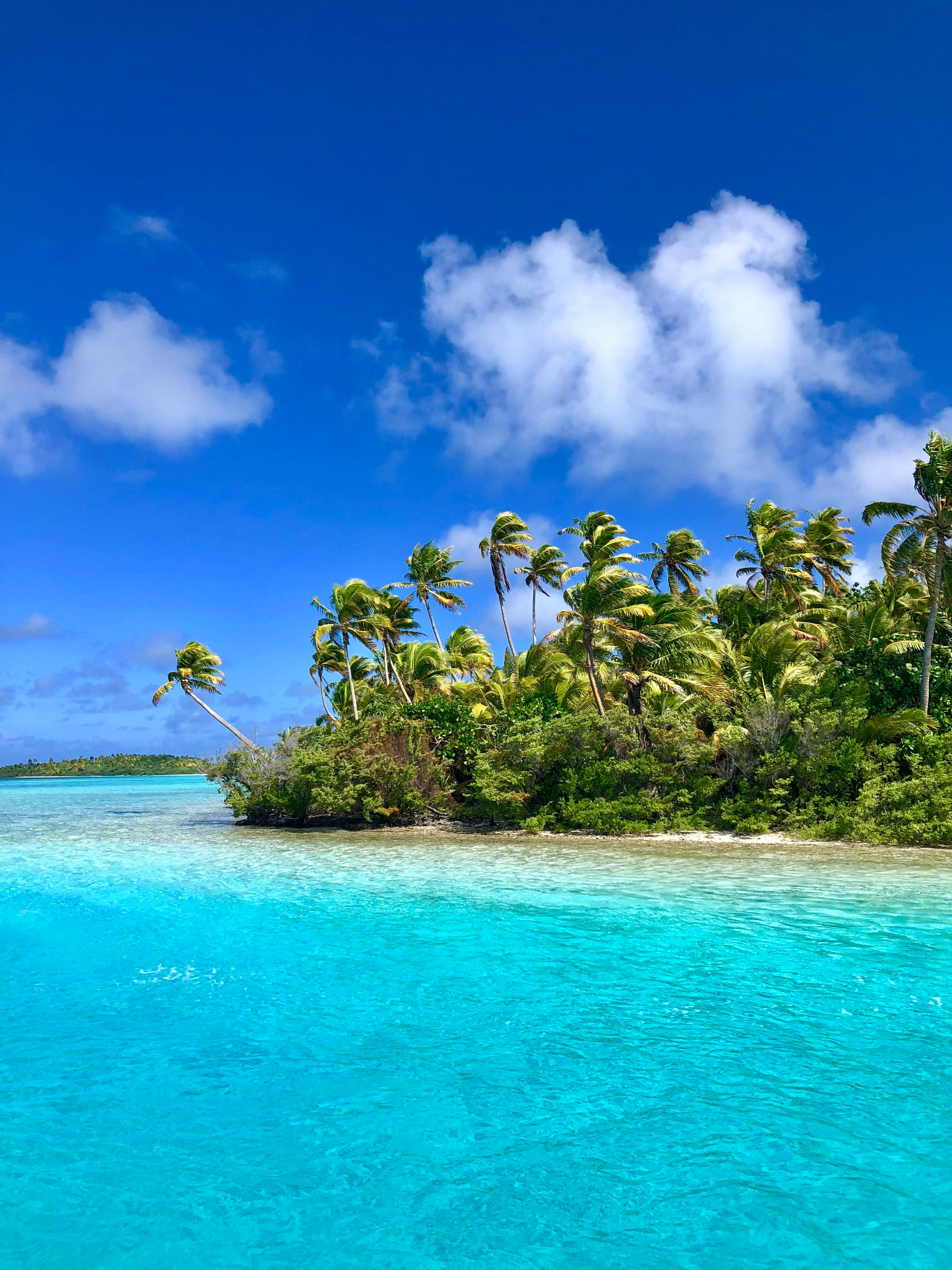 green palm trees on beach under blue sky and white clouds