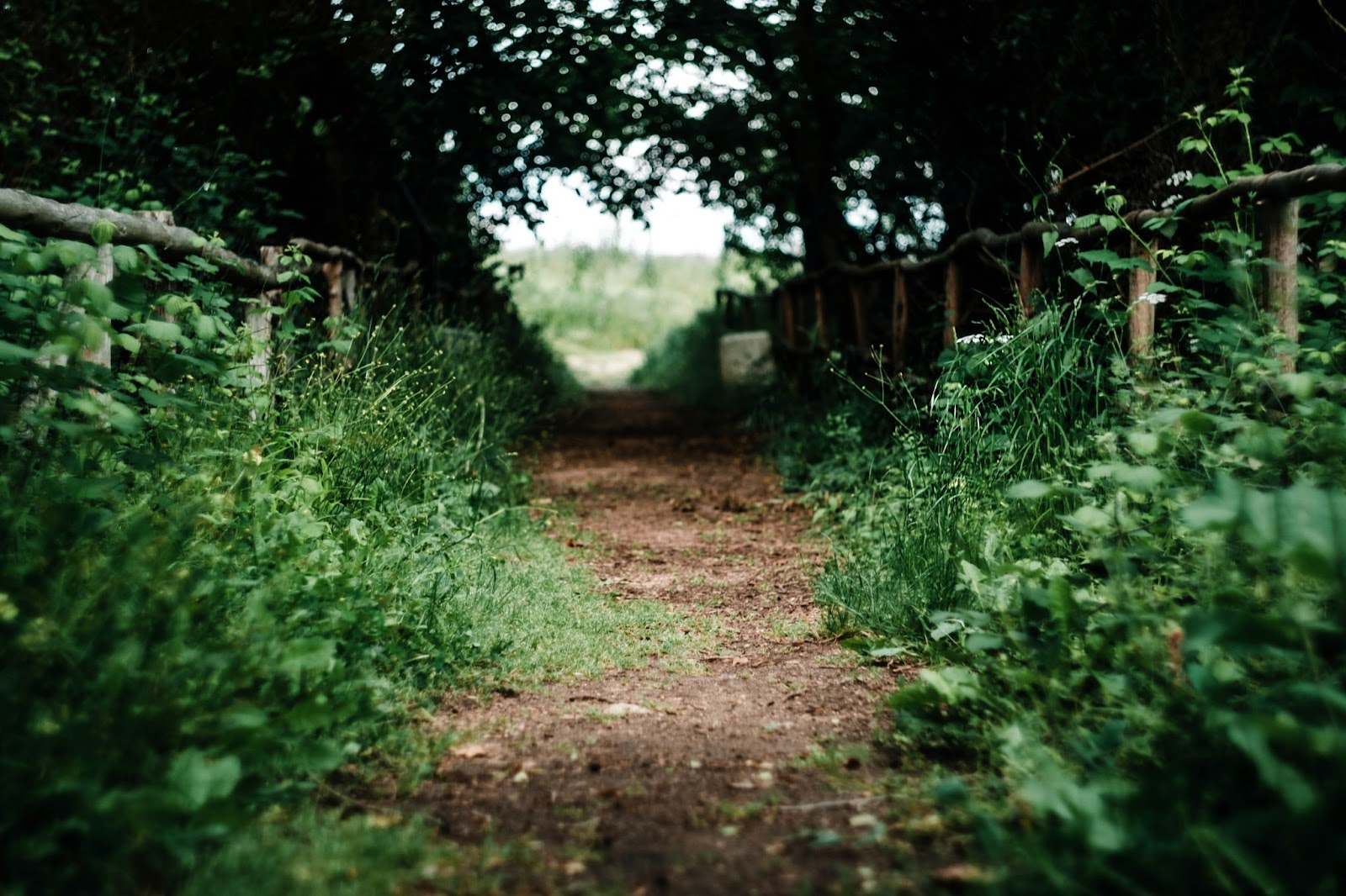 Small path outdoors surrounded by green plants and a wooden fence