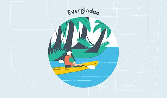 everglades graphic