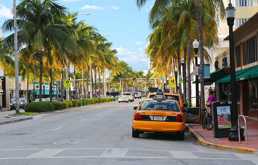 taxi on miami palm tree lined street