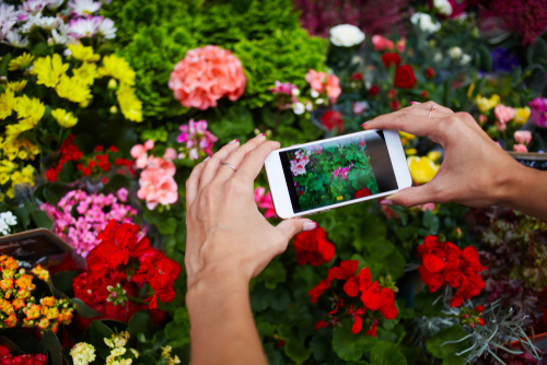 taking pictures of flowers