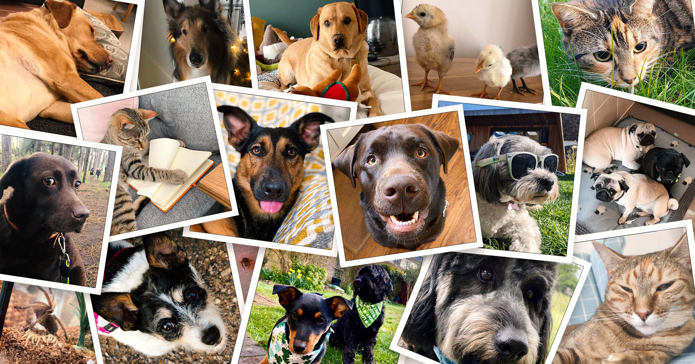 Collage of animals from the #PetsofInfoSum slack channel