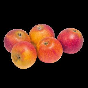 Tafelapfel Cox Orange