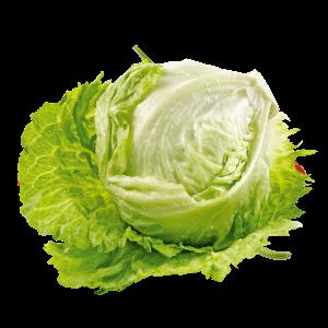 Bio Eisbergsalat