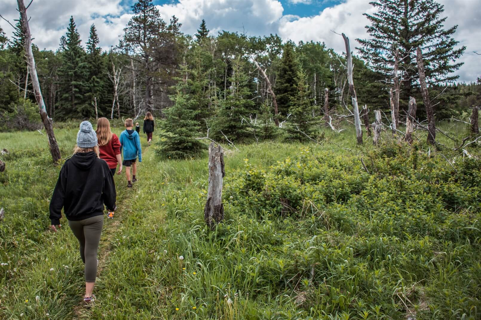 A group hikes through the trees in Cypress Hills Interprovincial Park.