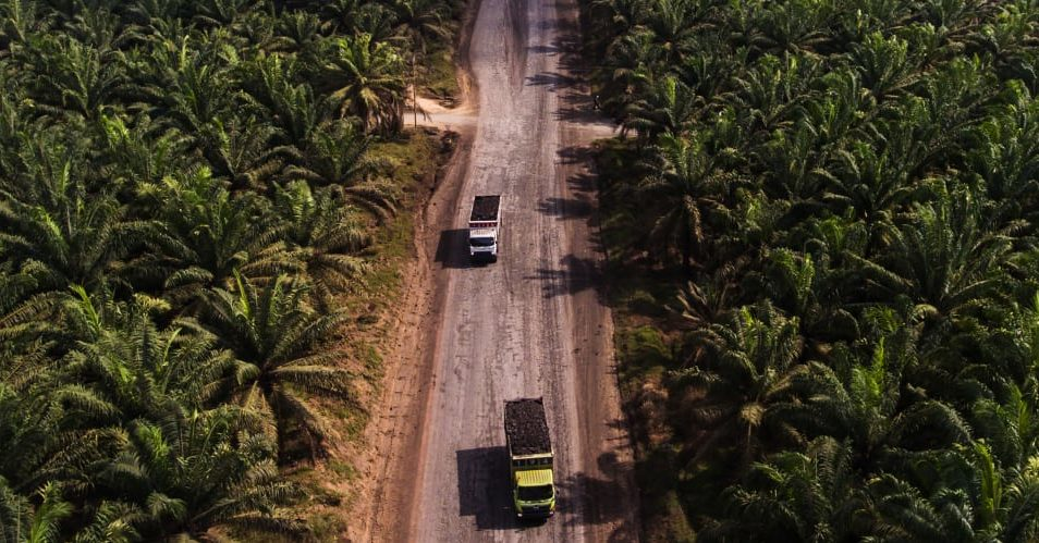 Unilever is using geolocation data and satellite imagery to check for deforestation in its supply chain – CNBC