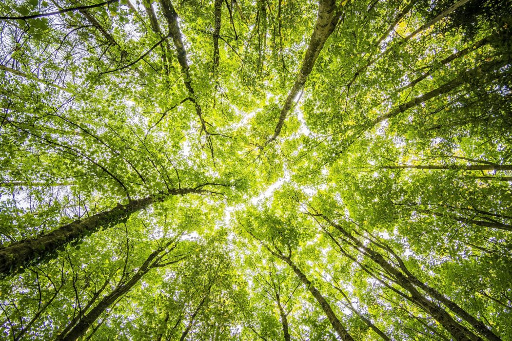 What does the CMA's latest guidance on 'green' claims mean for marketers?