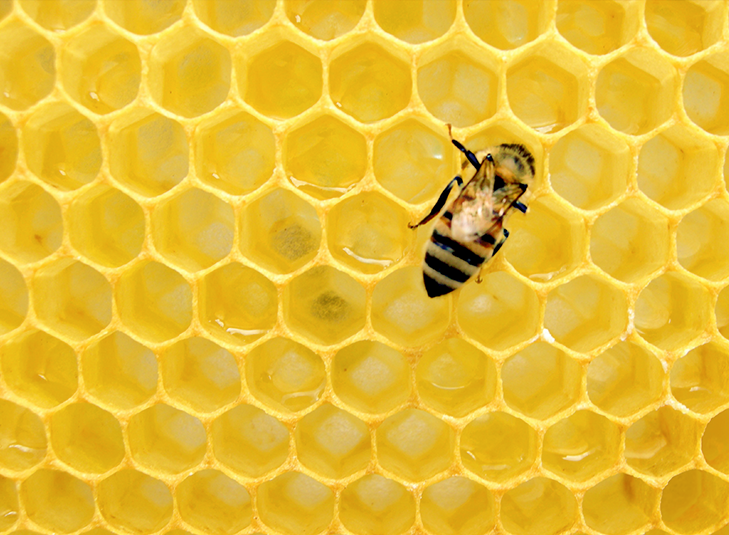 The Honey Heist
