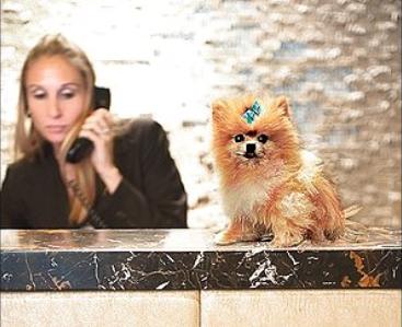 hotel front desk worker with dog on desk
