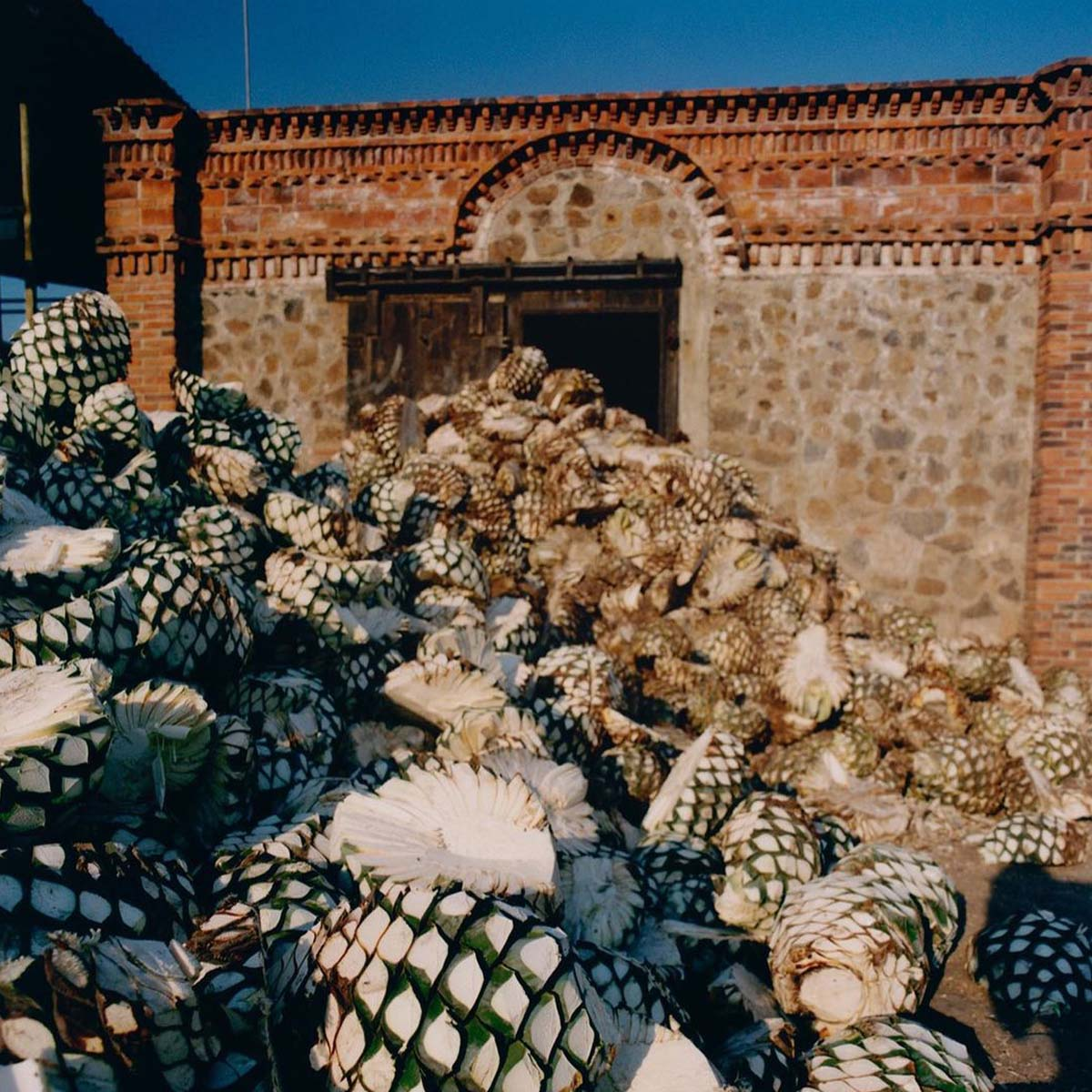 Tequila ready to be distilled