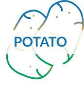 Traits evalution in potatoes icon