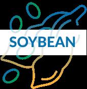 Soybean crop yield increase icon