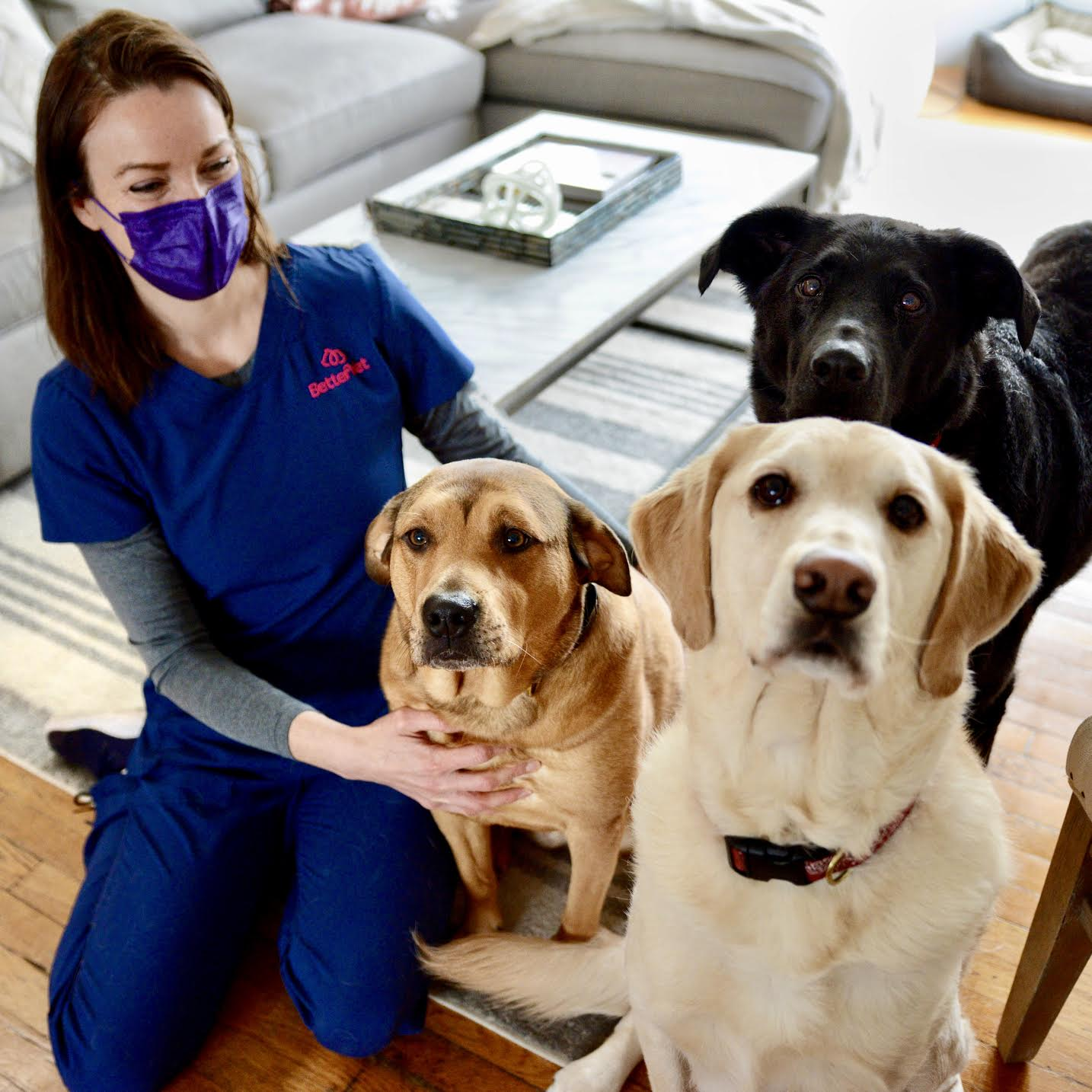 Three dogs and veterinarian image.