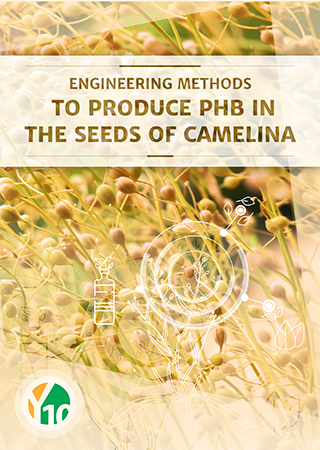 Engineering Methods to Produce PHB in the seeds of Camelina