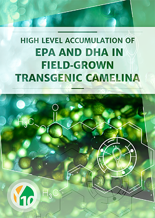 High level accumulation of EPA and DHA in field‐grown transgenic Camelina – a multi territory evaluation of TAG accumulation and heterogeneity