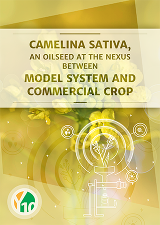 Camelina sativa, an oilseed at the nexus between model system and commercial crop