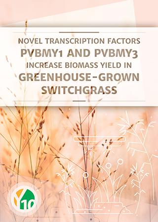 Novel transcription factors PvBMY1 and PvBMY3 increase biomass yield in greenhouse-grown switchgrass (Panicum virgatum L.)