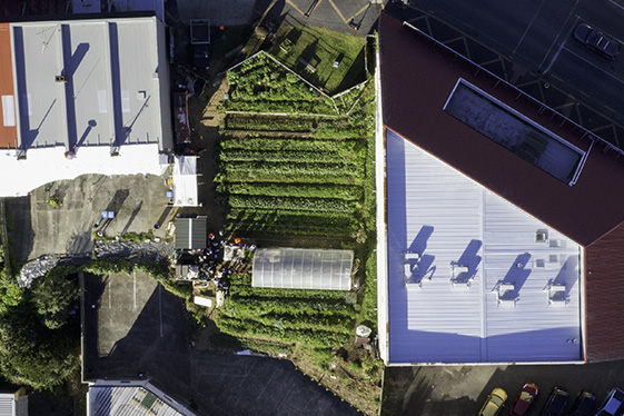 Feeding the city: how OMG gardens turned a barren city plot into the most productive piece of land in Auckland