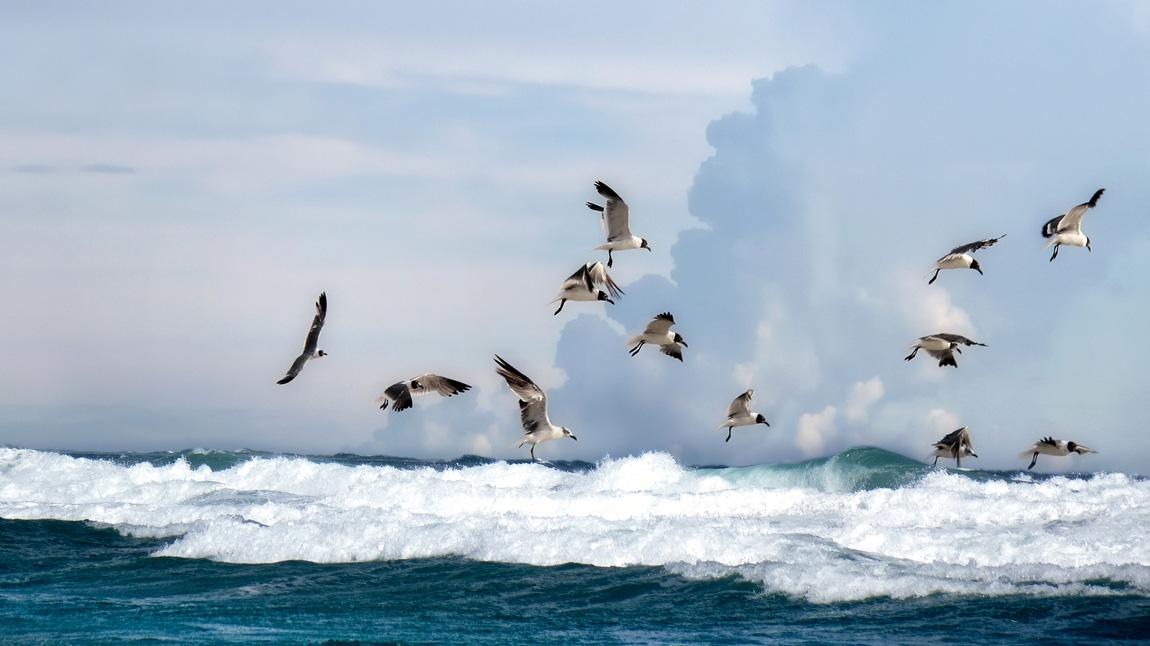 Seagal on blue sea