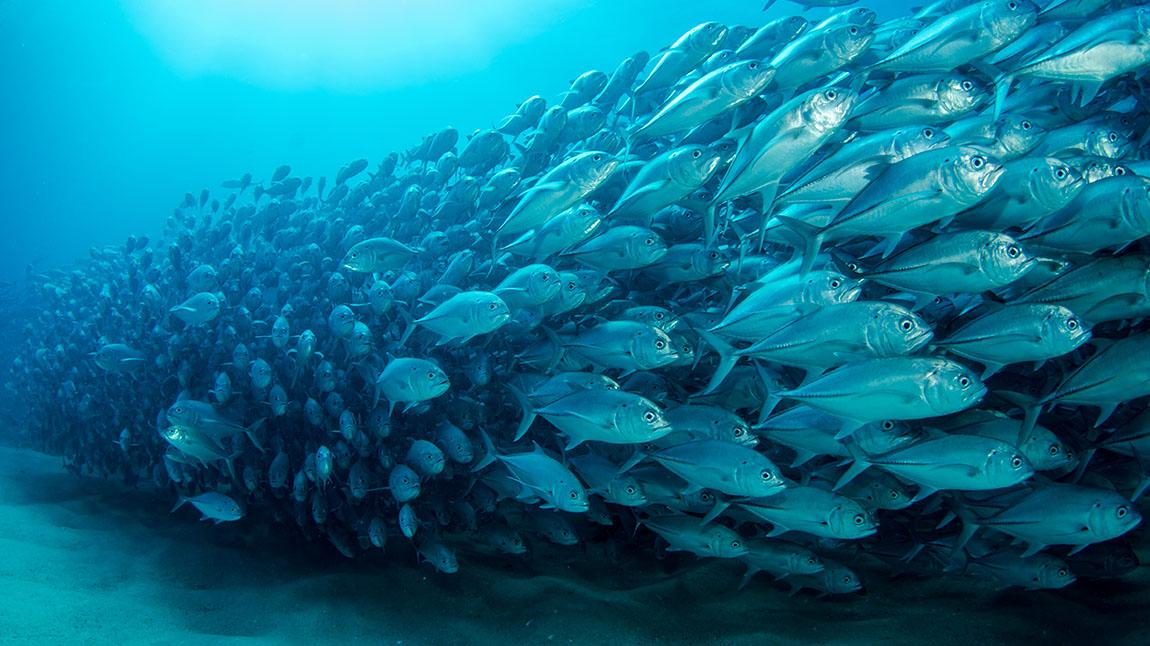 Fish on the ocean