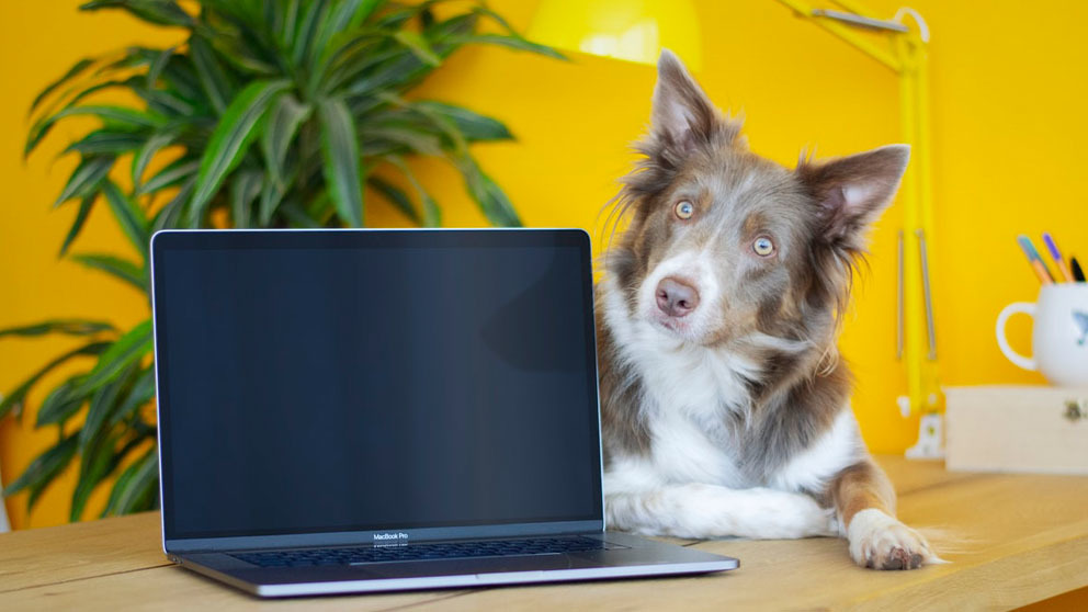 Dog sitting on a desk in front of an open laptop