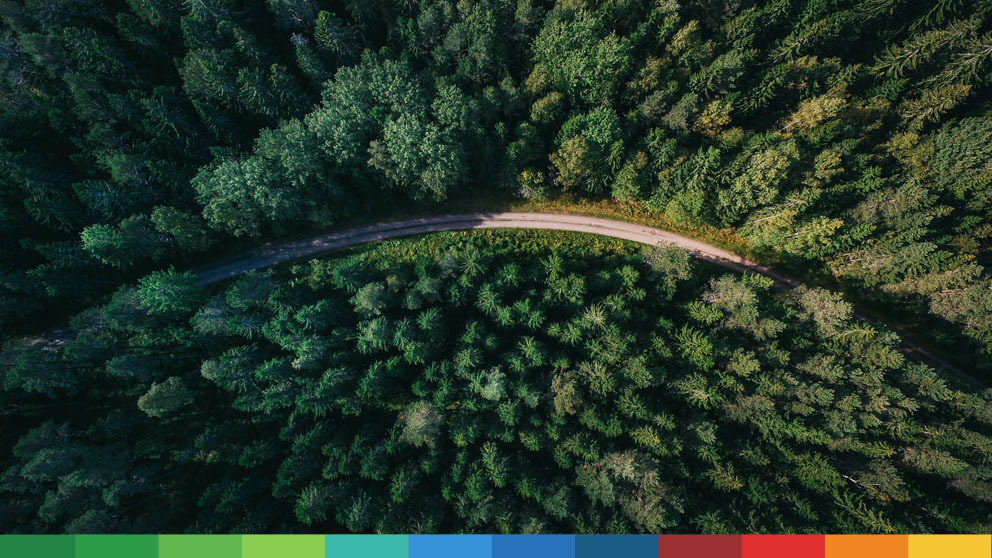 Top view of green forest