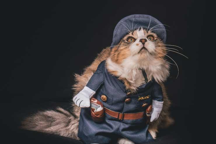 Cat cop on duty