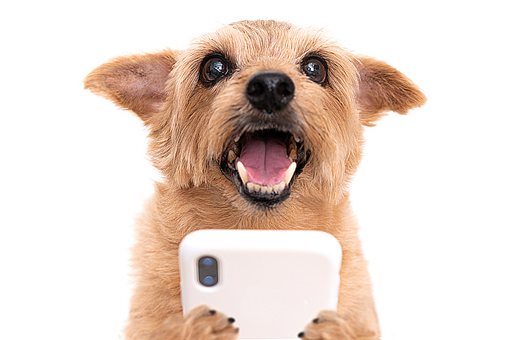 Happy dog on cellphone