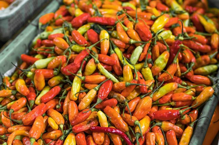 a close up of multi-colored peppers
