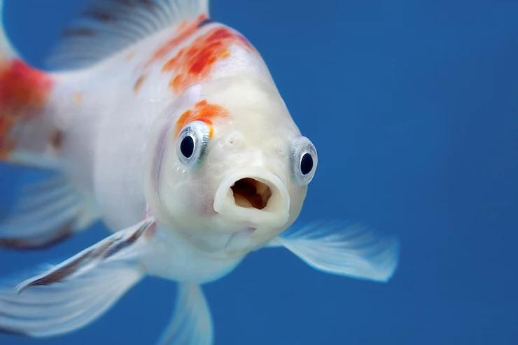 Tropical fish in awe