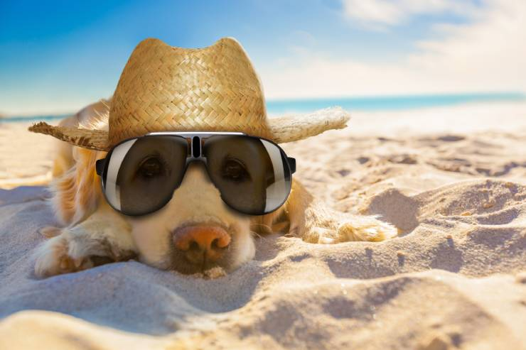 golden retriever lays on the beach wearing a hat and sunglasses