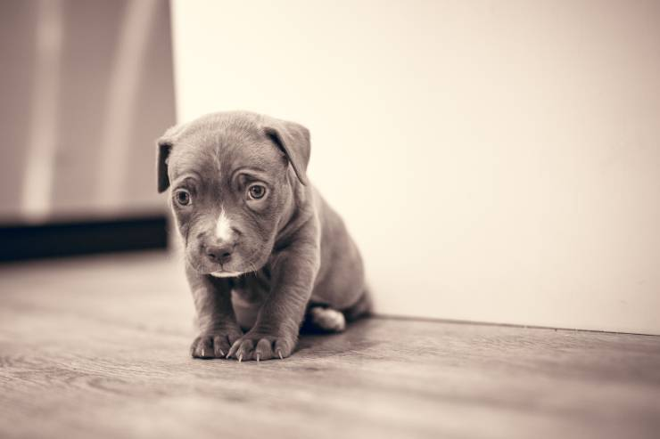 a sad puppy sits by himself