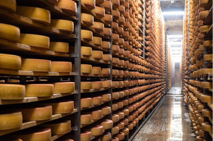 Endless wheels of cheese stacked on shelves up to the ceiling.