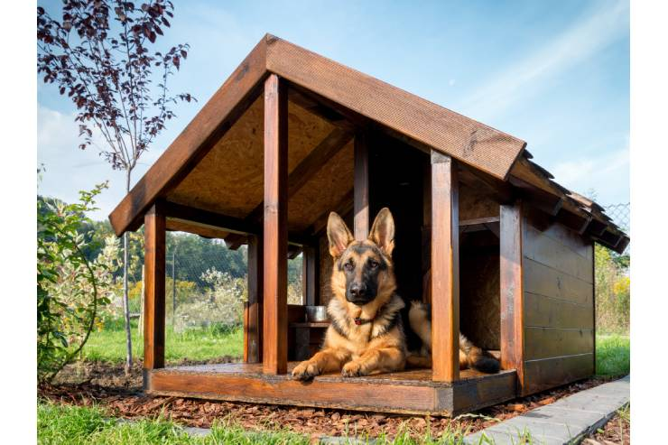German Shepard with his ears poked up sitting in a wooden doghouse.