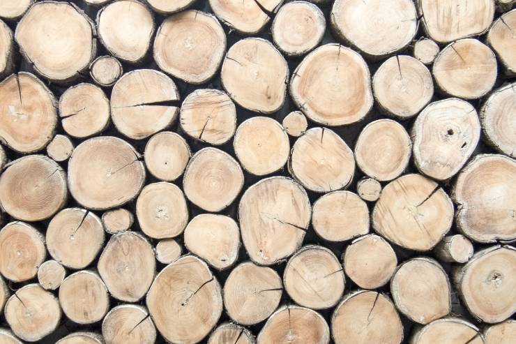 many cut wood logs are stacked together