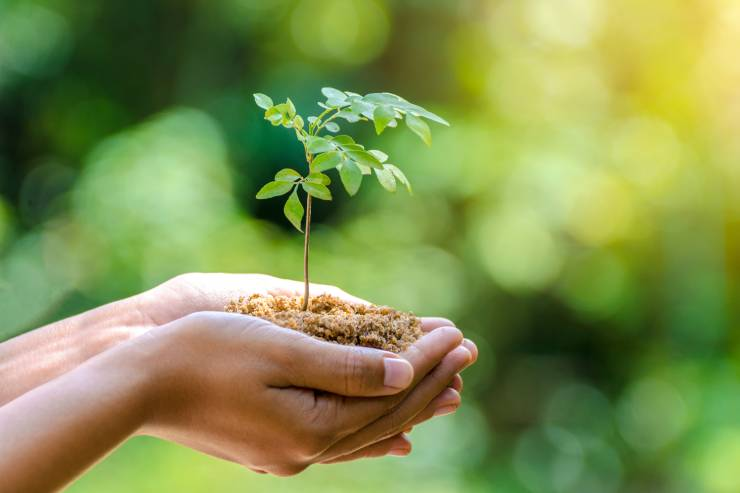 a pair of hands cupped together holding dirt with a seedling tree