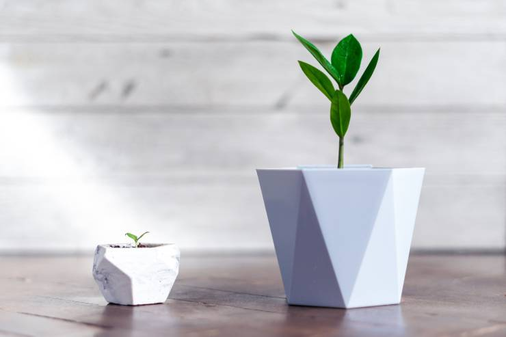a small white potted plant and a larger white potted plant side by side