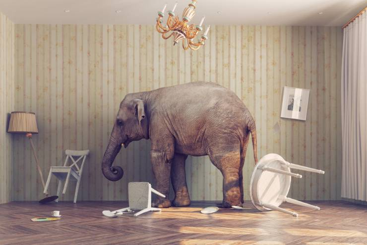 the elephant in the room has knocked over everything
