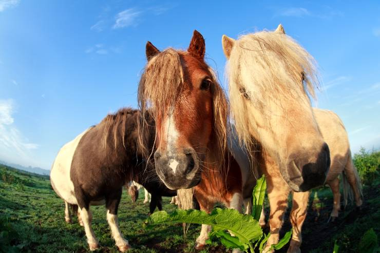 Up Close Angle of Three Horses with Blue Skies and Green Grass in the Background.