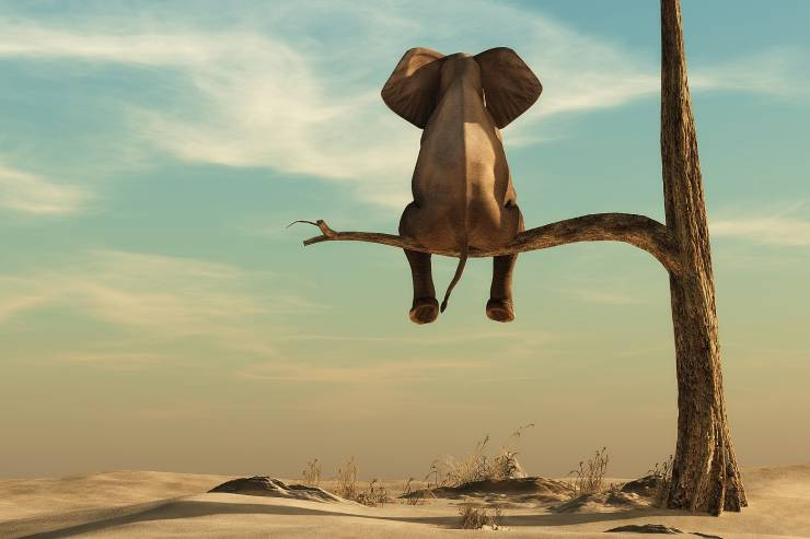 an elephant sits on the branch of a lone, barren tree in a dessert
