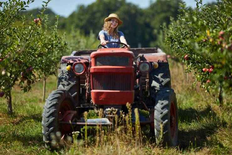 a young woman drives a red tractor in an orchard