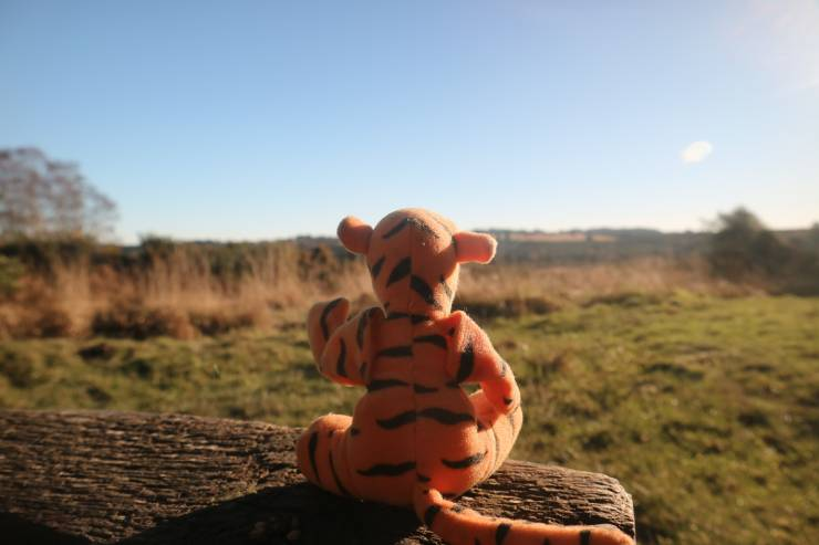 a Tigger stuffed animal sits on a log looking out to a grassy meadow