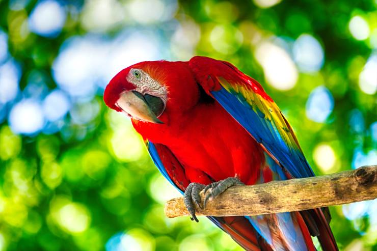 a red parrot sits on a tree branch in the forest