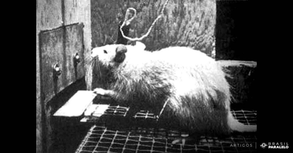 Experimento-feito-com-ratos-que-buscavam-prazer-e-ficavam-viciados