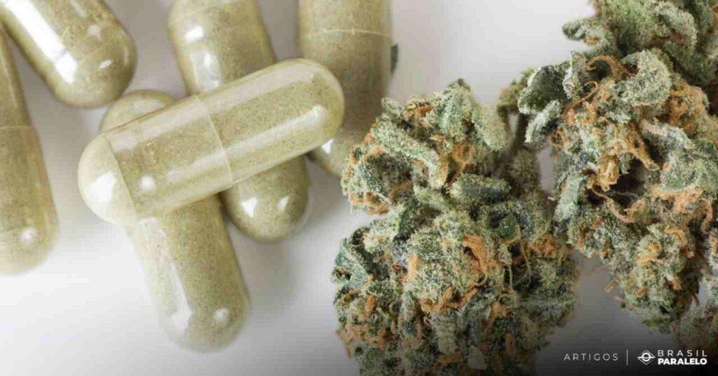 Uso-medicinal-da-maconha