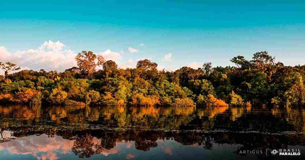 Importancia-da-floresta-amazonica