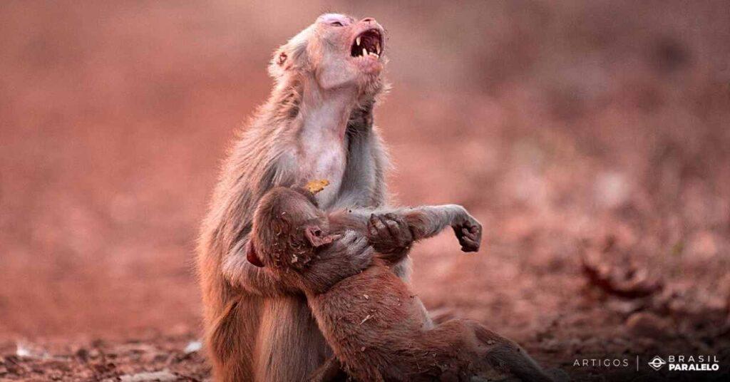 Macaca-com-o-filhote-chorando-em-queimada