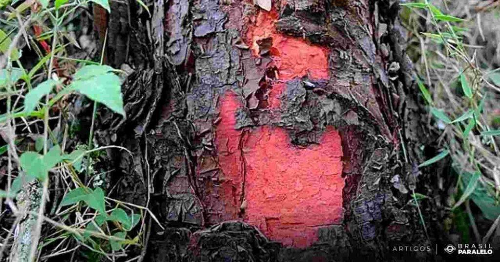 Escambo-entre-portugueses-e-indios-trocando-objetos-por-pau-brasil-para-tintura-vermelha