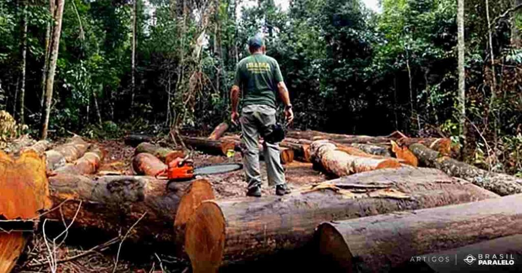 consequencias-do-desmatamento-na-amazonia